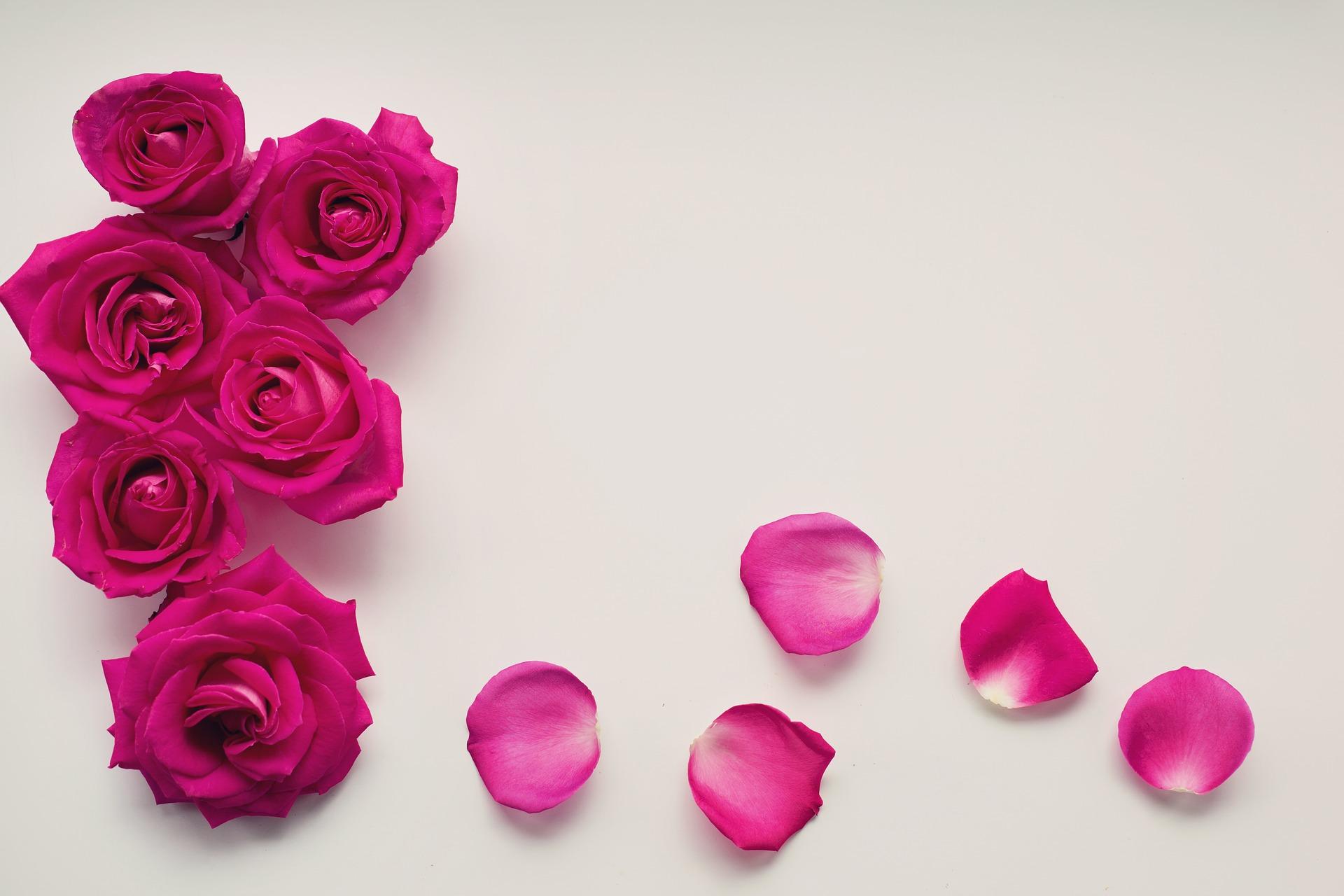 Rosa Rosen auf grauem Hintergrund
